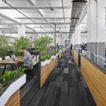 O que é design biofílico e como utilizá-lo no meu escritório?